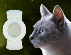 LIOFELINE Feline Intraocular Lenses